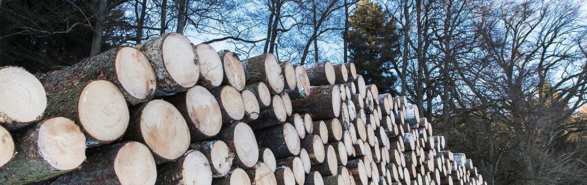 Holzeinschlag Baumstämme